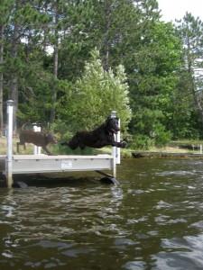 dog-dock-diving